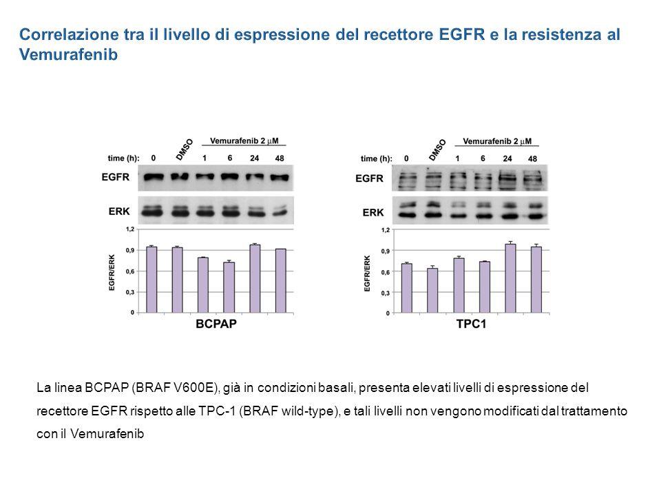 Correlazione tra il livello di espressione del recettore EGFR e la resistenza al Vemurafenib