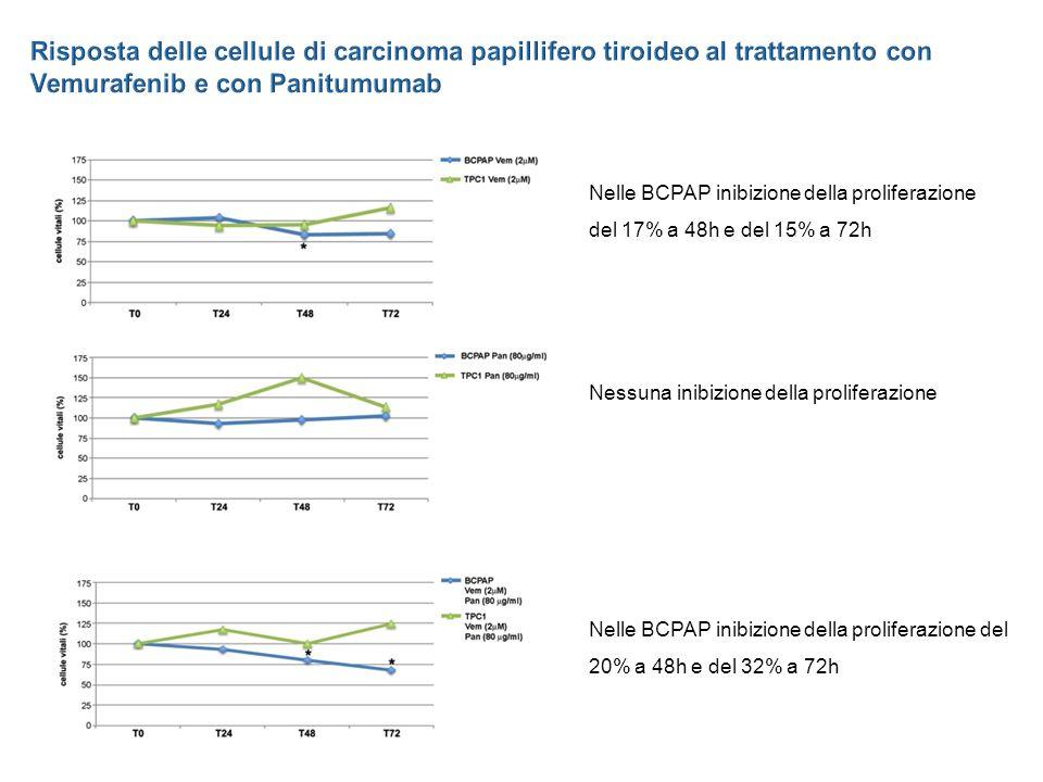 Risposta delle cellule di carcinoma papillifero tiroideo al trattamento con Vemurafenib e con Panitumumab