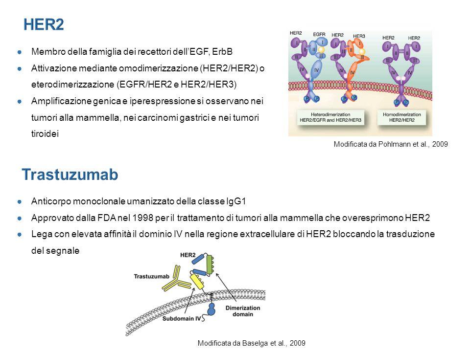 HER2 Trastuzumab Membro della famiglia dei recettori dell'EGF, ErbB