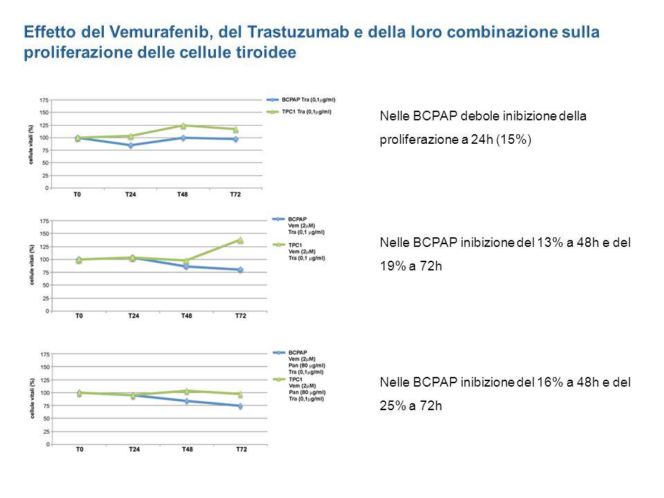 Effetto del Vemurafenib, del Trastuzumab e della loro combinazione sulla proliferazione delle cellule tiroidee