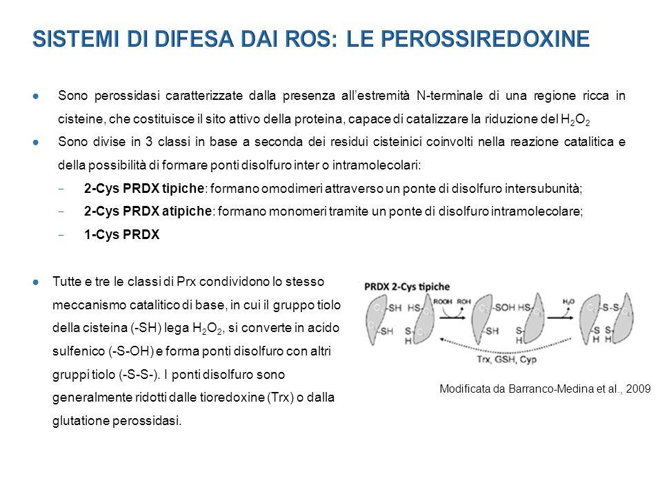 SISTEMI DI DIFESA DAI ROS: LE PEROSSIREDOXINE