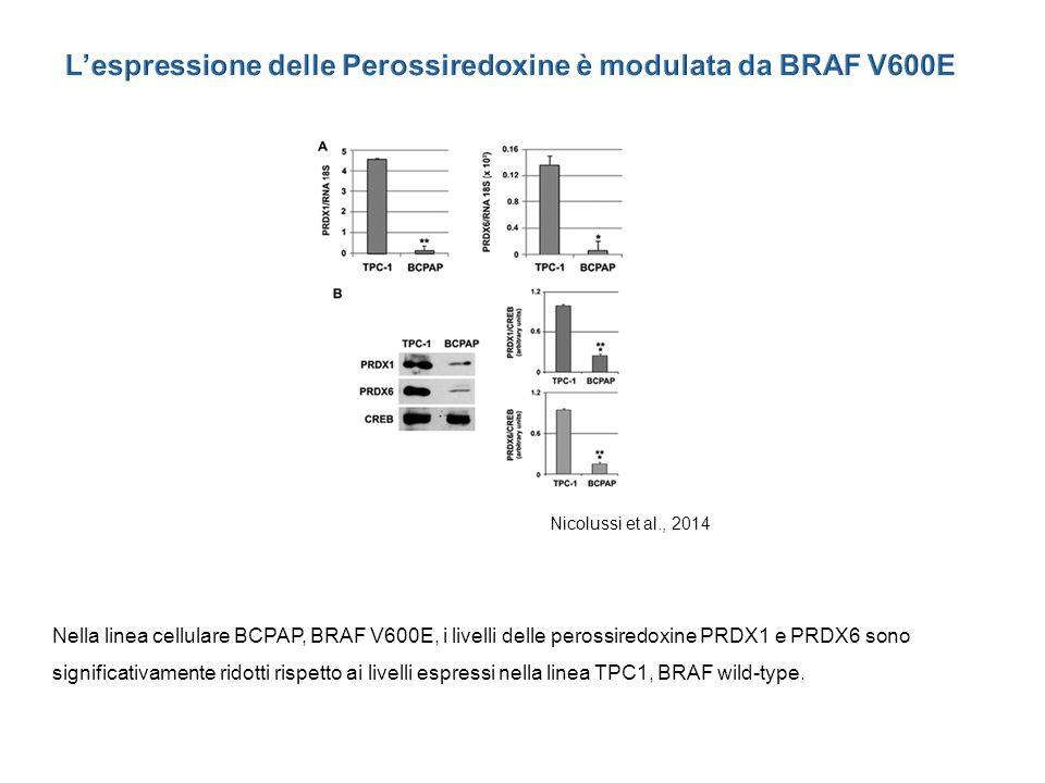 L'espressione delle Perossiredoxine è modulata da BRAF V600E