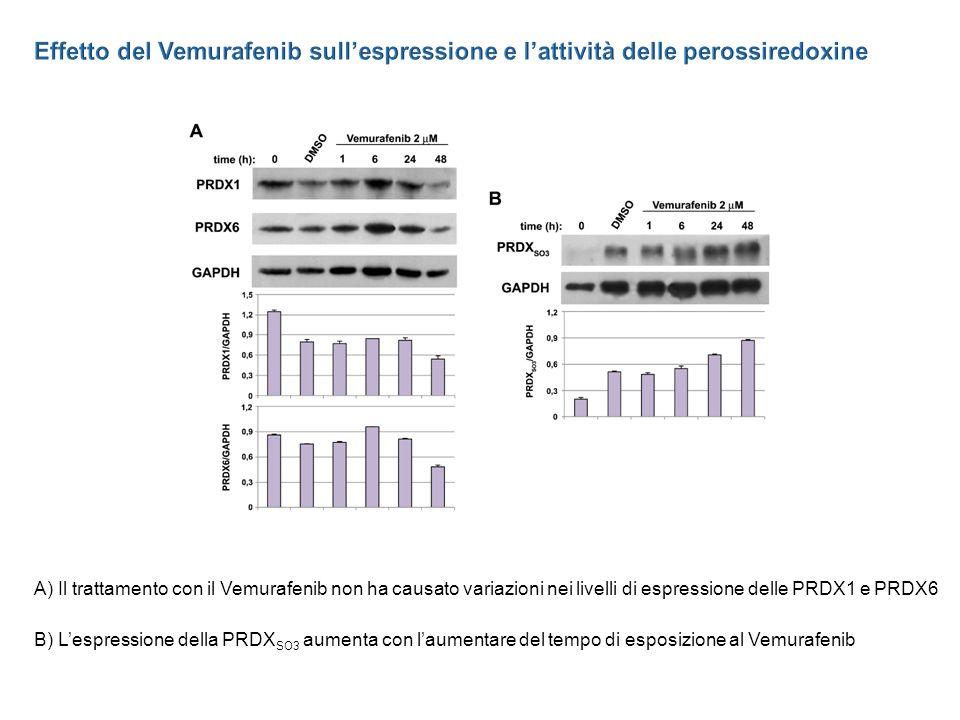 Effetto del Vemurafenib sull'espressione e l'attività delle perossiredoxine