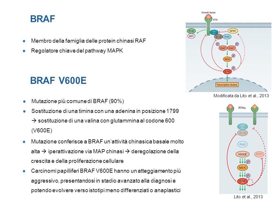 BRAF BRAF V600E Membro della famiglia delle protein chinasi RAF
