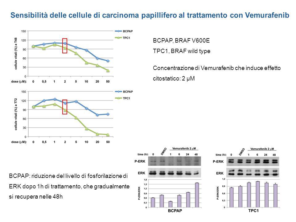 Sensibilità delle cellule di carcinoma papillifero al trattamento con Vemurafenib