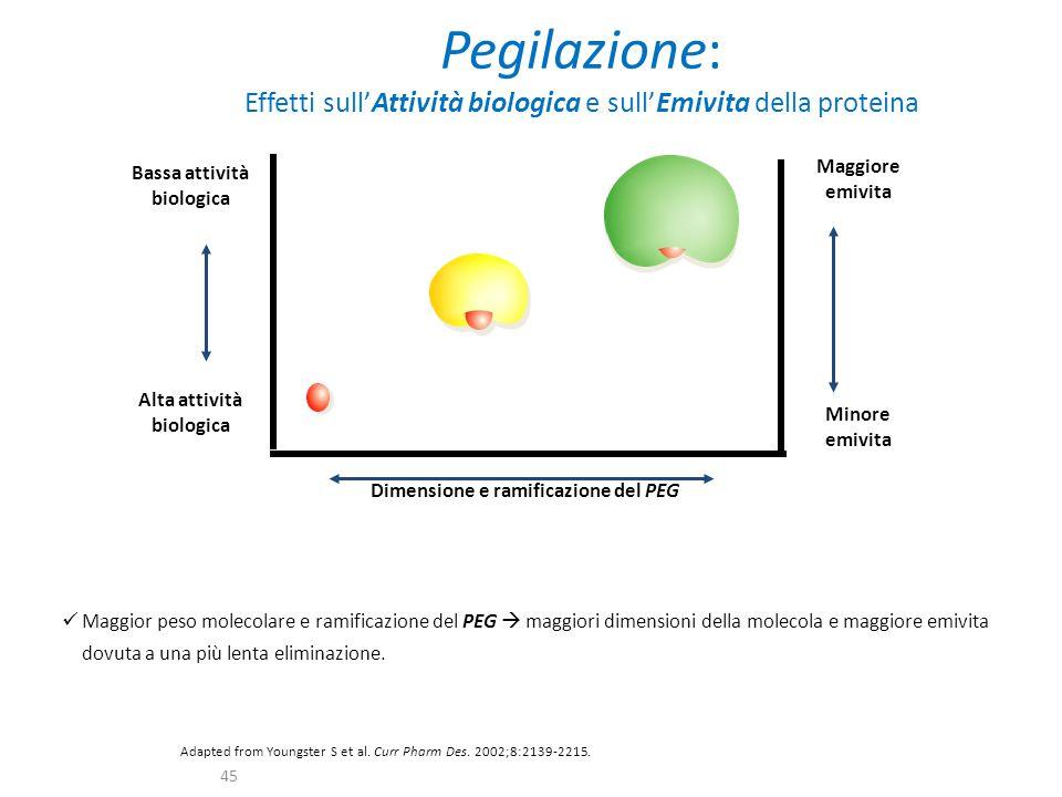 Pegilazione: Effetti sull'Attività biologica e sull'Emivita della proteina