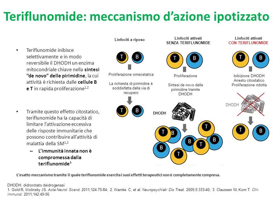 Teriflunomide: meccanismo d'azione ipotizzato