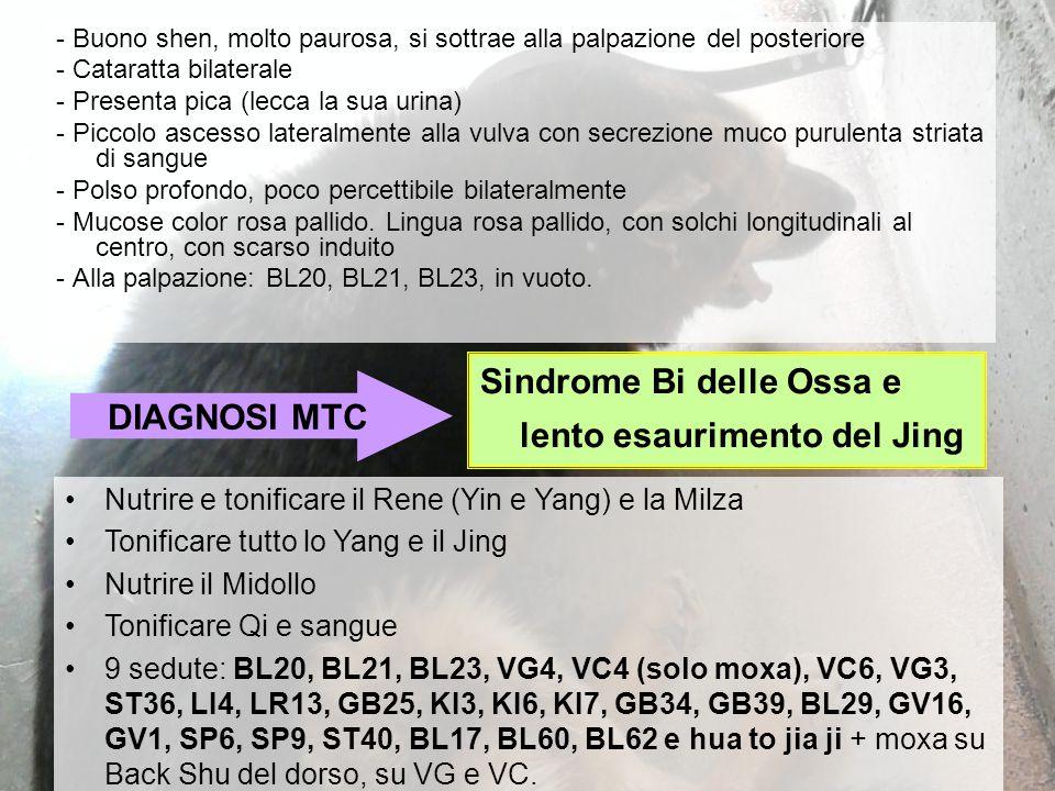 Sindrome Bi delle Ossa e lento esaurimento del Jing DIAGNOSI MTC