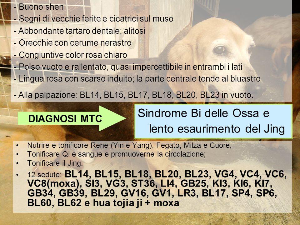 Sindrome Bi delle Ossa e lento esaurimento del Jing