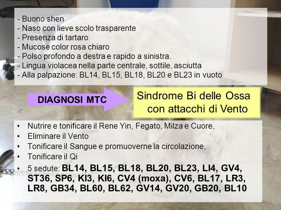 Sindrome Bi delle Ossa con attacchi di Vento