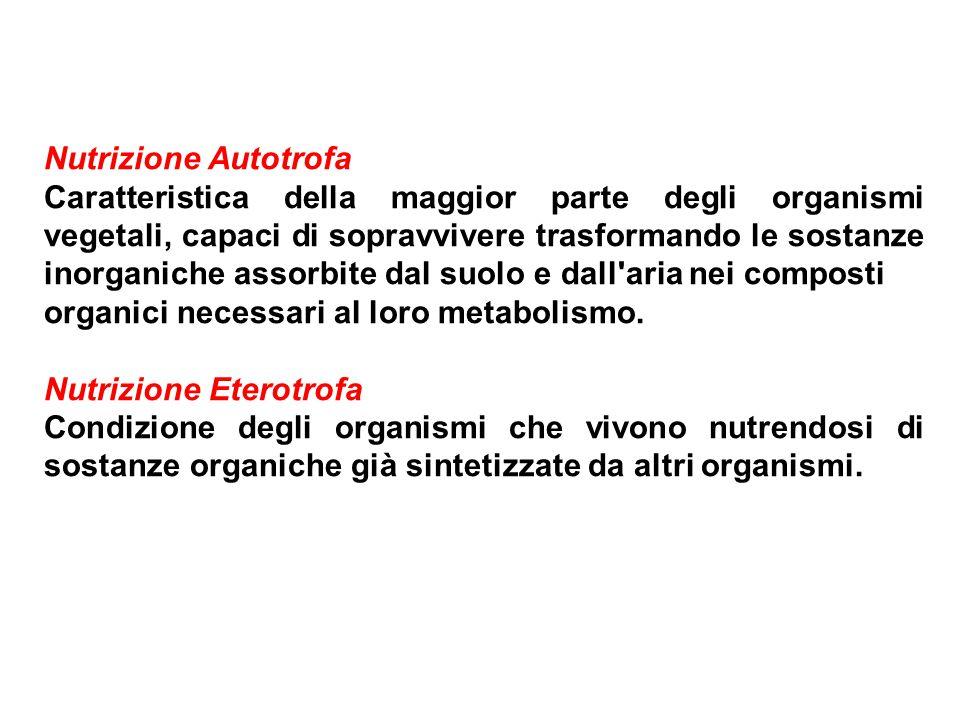 Nutrizione Autotrofa