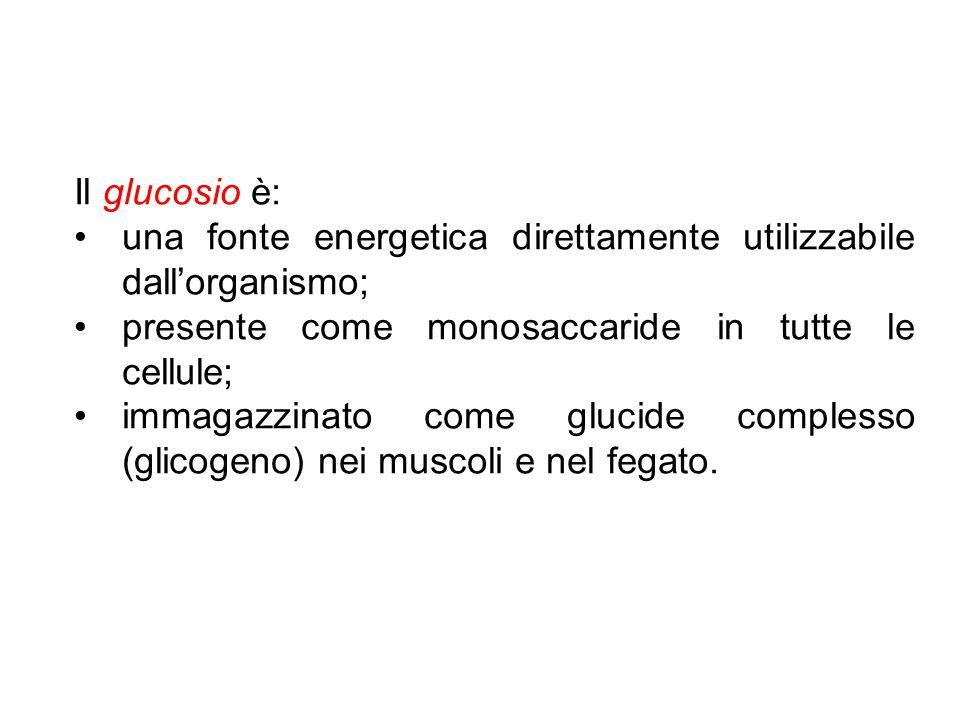 Il glucosio è: una fonte energetica direttamente utilizzabile dall'organismo; presente come monosaccaride in tutte le cellule;