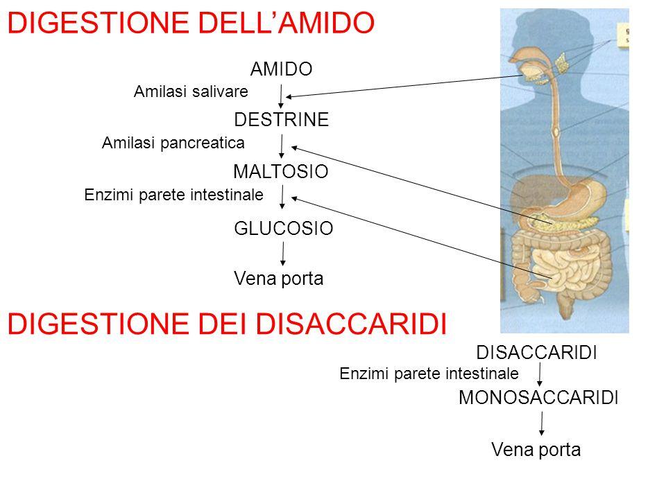 DIGESTIONE DELL'AMIDO