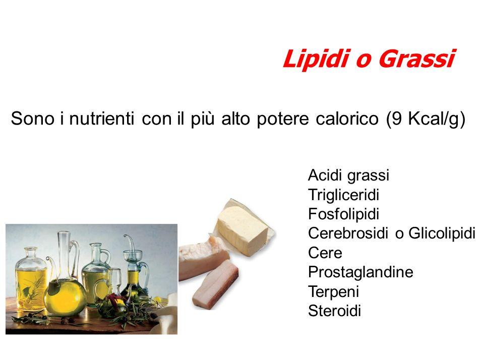 Lipidi o Grassi Sono i nutrienti con il più alto potere calorico (9 Kcal/g) Acidi grassi. Trigliceridi.