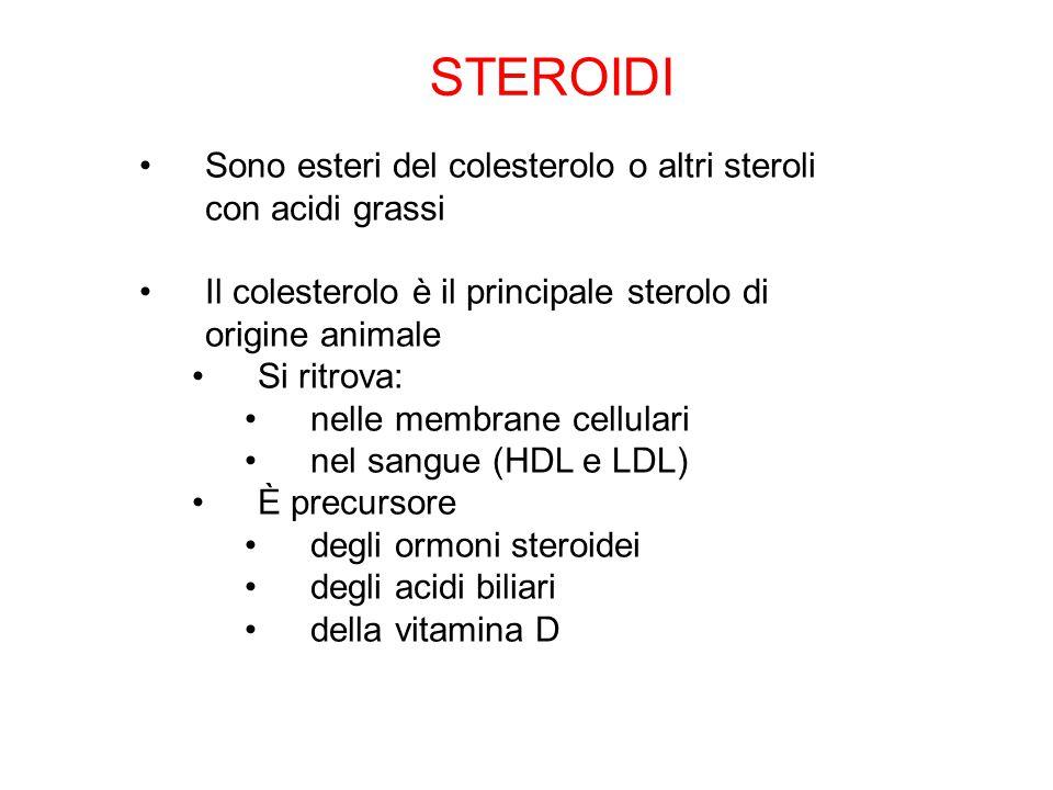 STEROIDI Sono esteri del colesterolo o altri steroli con acidi grassi