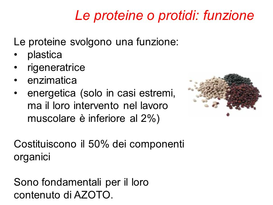 Le proteine o protidi: funzione