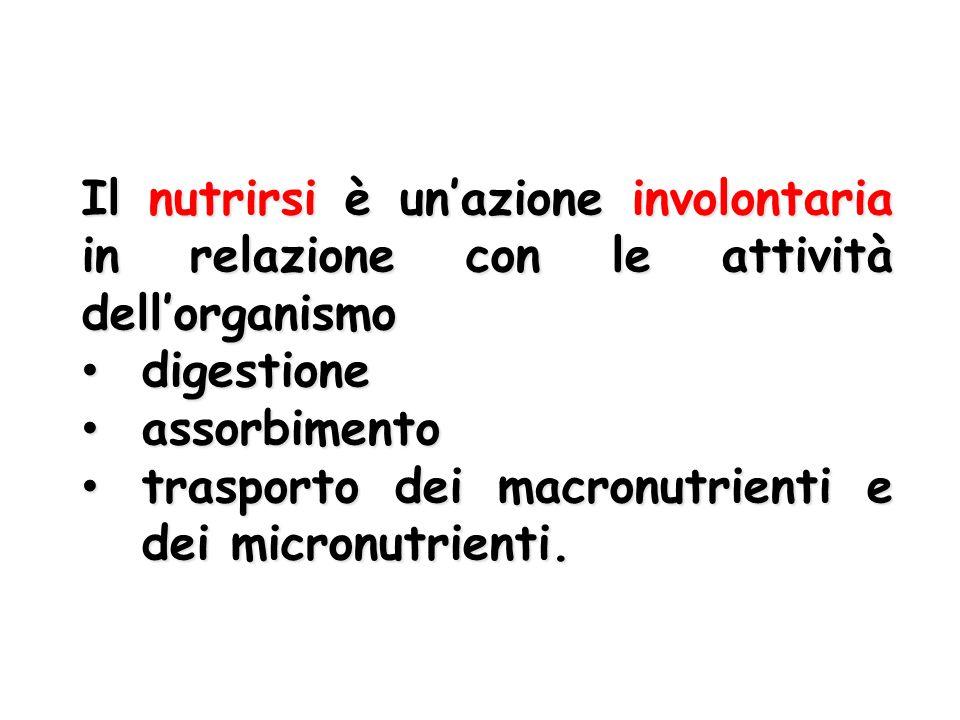 Il nutrirsi è un'azione involontaria in relazione con le attività dell'organismo