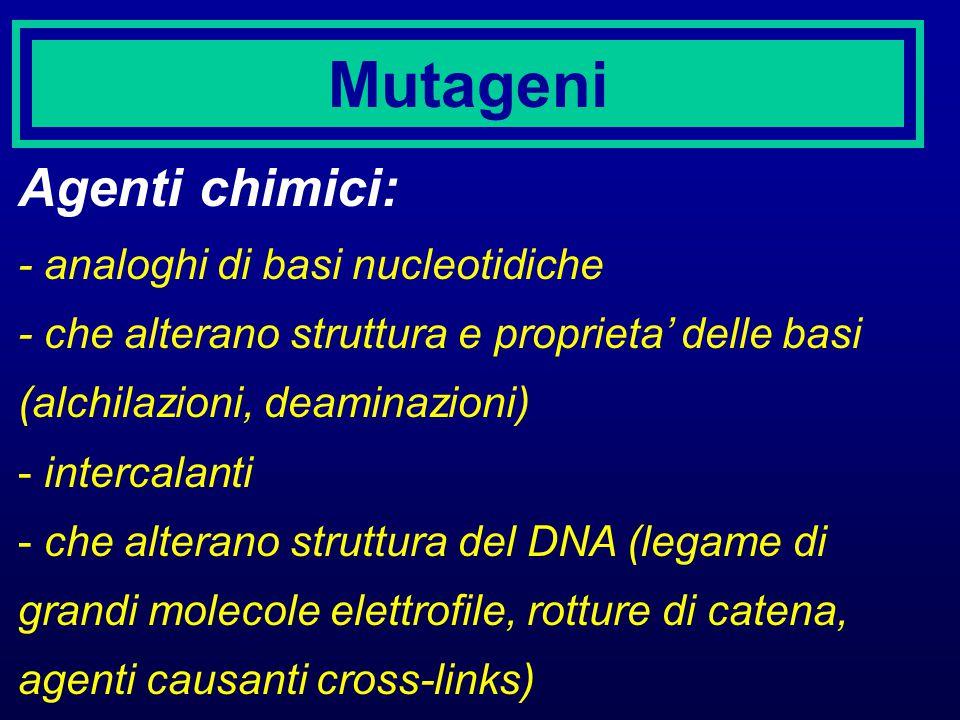 Mutageni Agenti chimici: - analoghi di basi nucleotidiche