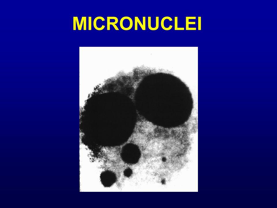 MICRONUCLEI