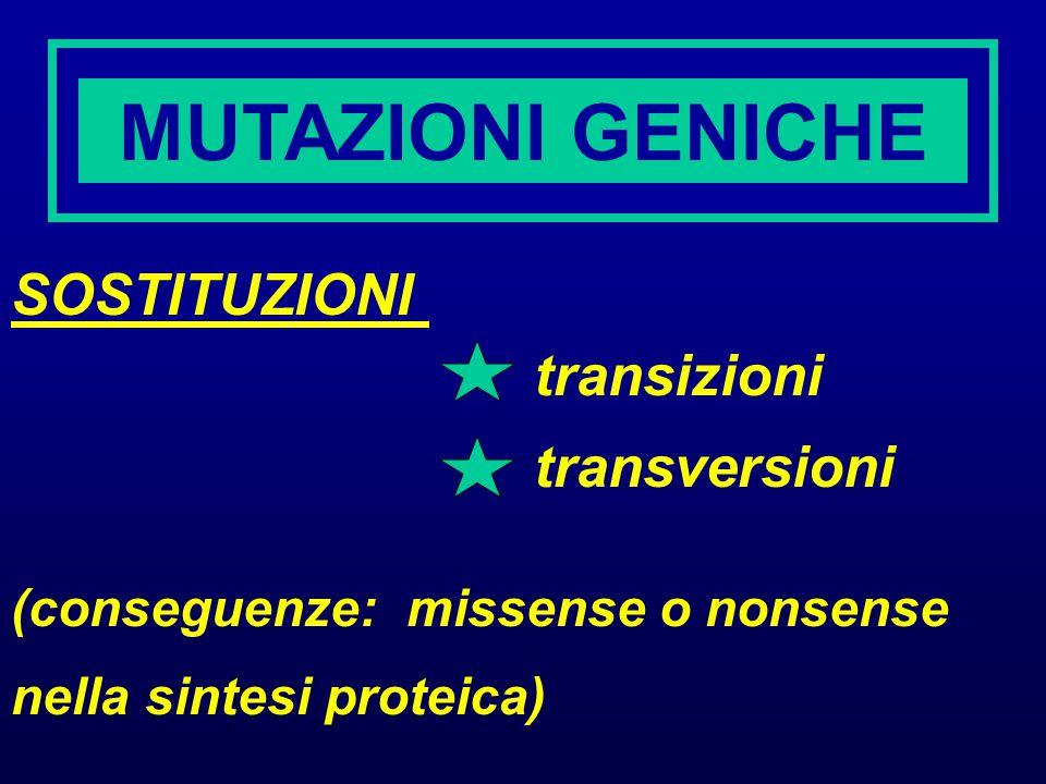 MUTAZIONI GENICHE SOSTITUZIONI transizioni transversioni