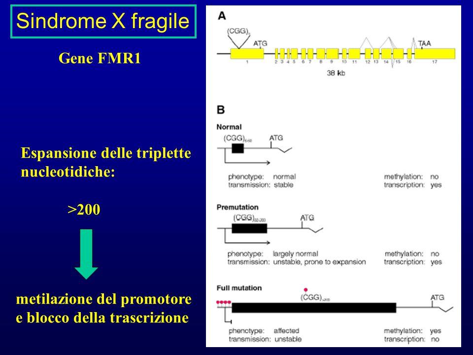 Sindrome X fragile Gene FMR1 Espansione delle triplette nucleotidiche: