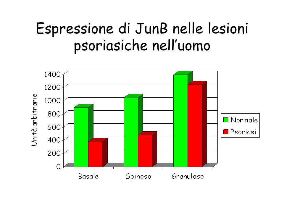 Espressione di JunB nelle lesioni psoriasiche nell'uomo