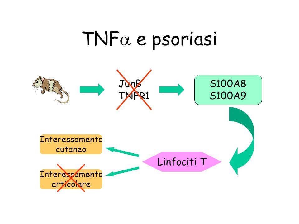 TNFa e psoriasi JunB S100A8 TNFR1 S100A9 Linfociti T Interessamento