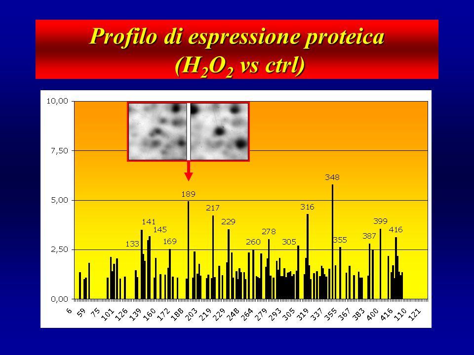 Profilo di espressione proteica (H2O2 vs ctrl)