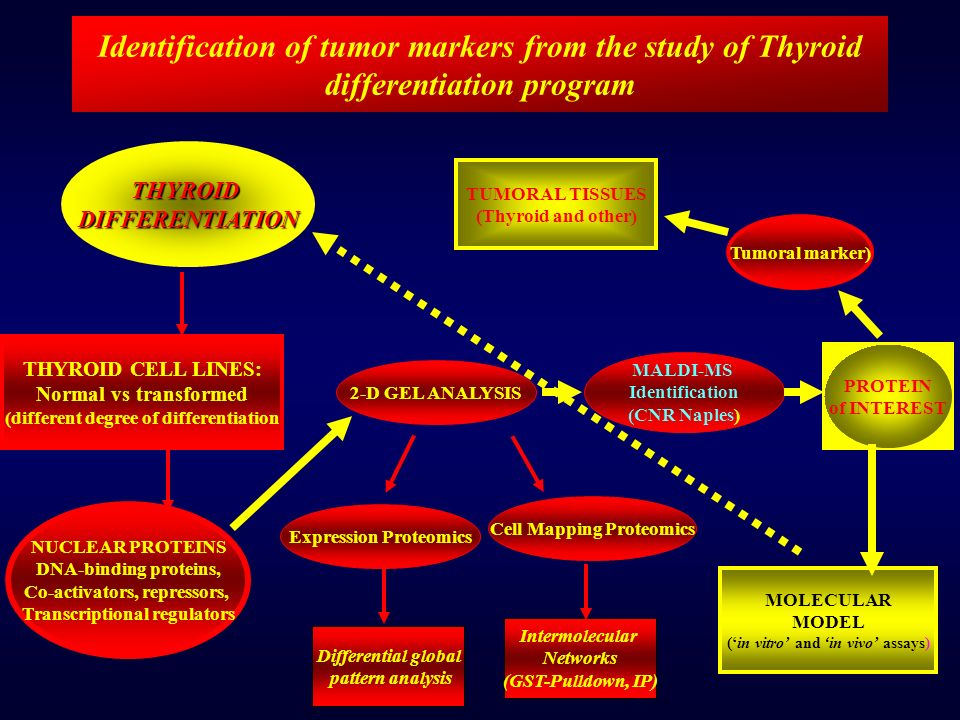 Identification of tumor markers from the study of Thyroid differentiation program