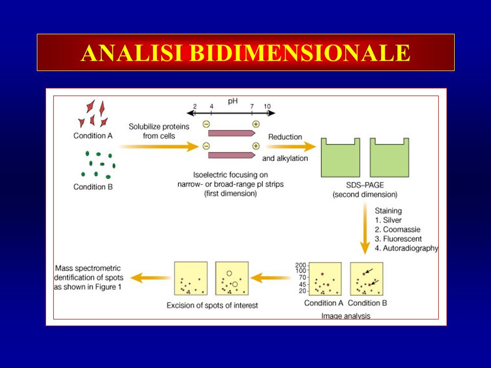 ANALISI BIDIMENSIONALE