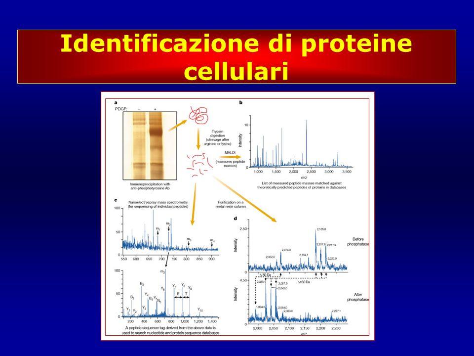 Identificazione di proteine cellulari