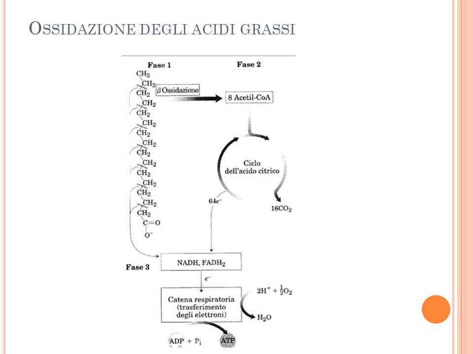 Ossidazione degli acidi grassi