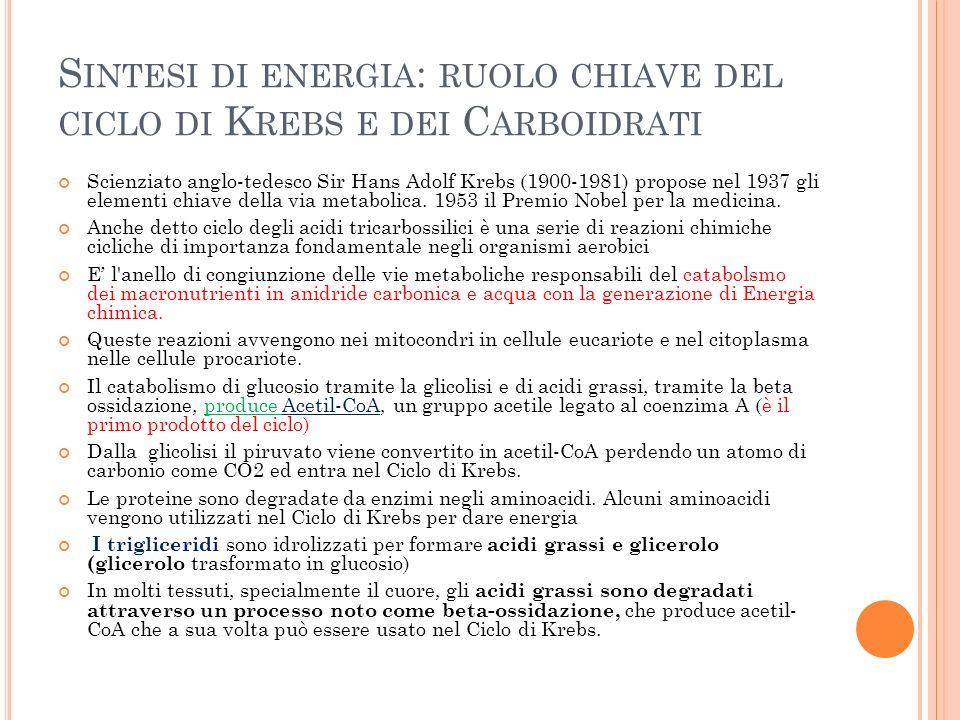 Sintesi di energia: ruolo chiave del ciclo di Krebs e dei Carboidrati