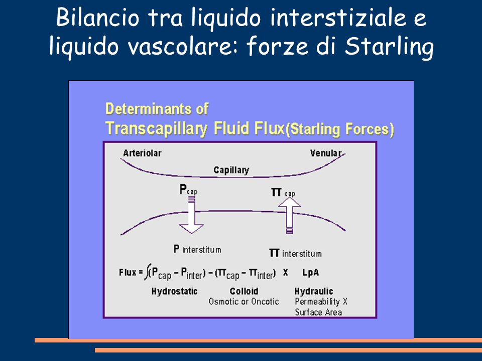 Bilancio tra liquido interstiziale e liquido vascolare: forze di Starling