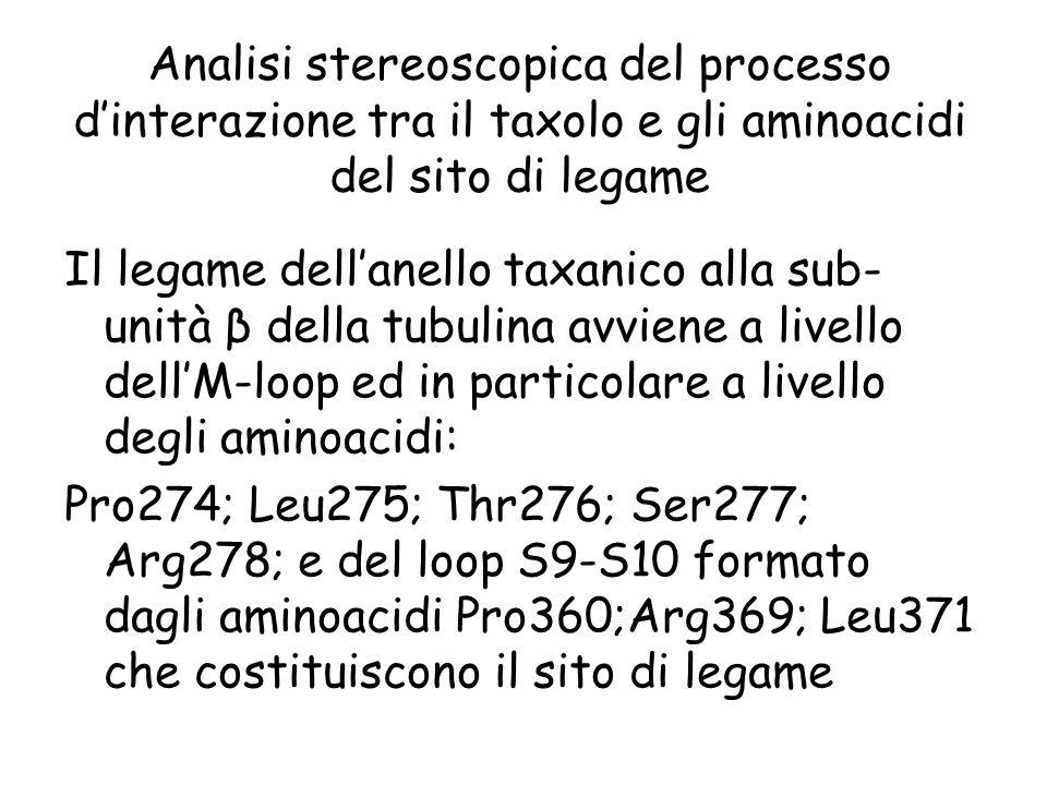 Analisi stereoscopica del processo d'interazione tra il taxolo e gli aminoacidi del sito di legame