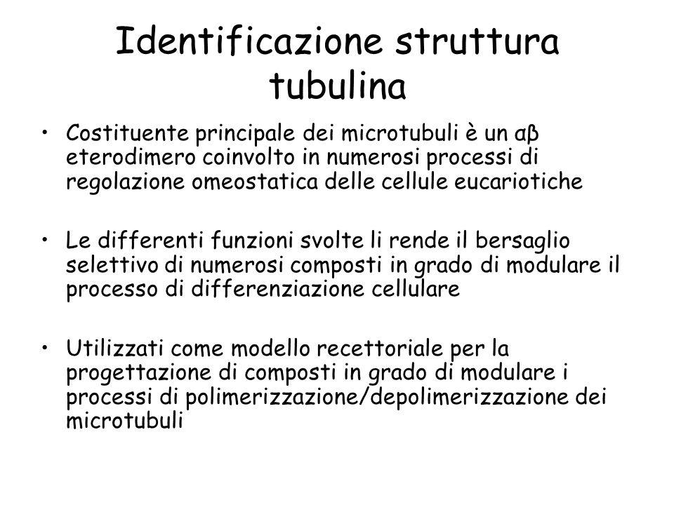 Identificazione struttura tubulina