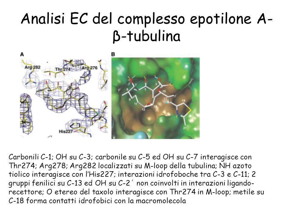 Analisi EC del complesso epotilone A- β-tubulina