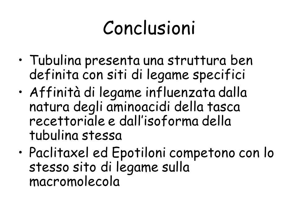 Conclusioni Tubulina presenta una struttura ben definita con siti di legame specifici.
