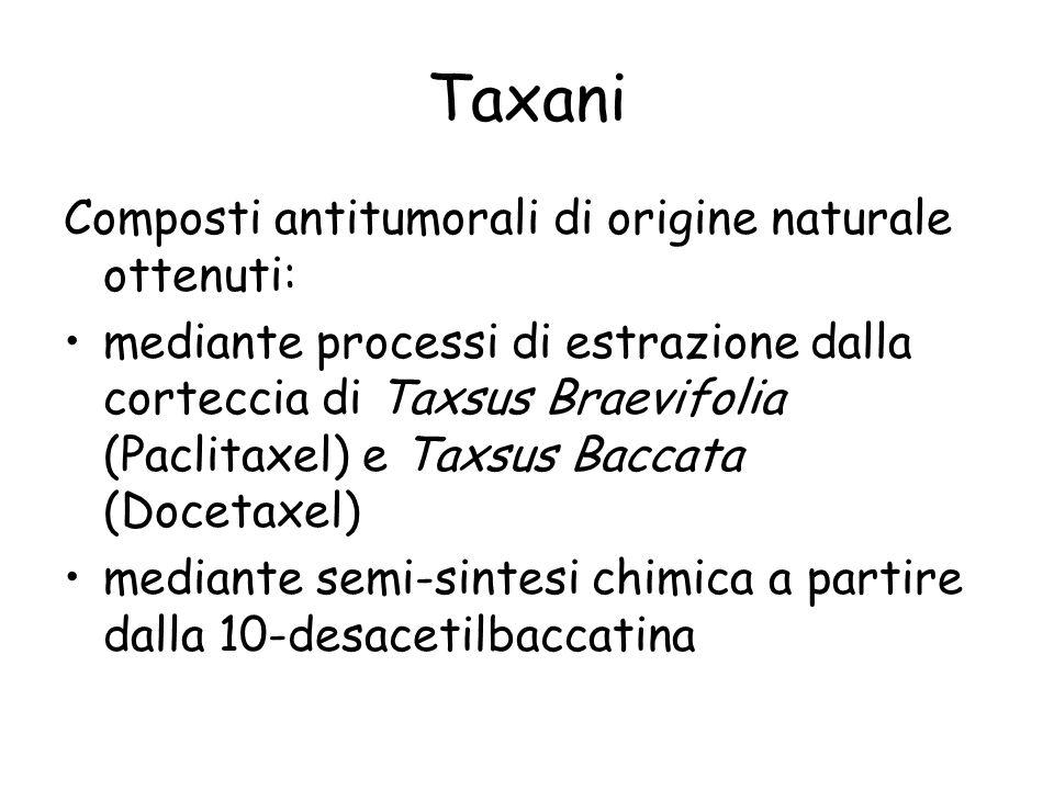 Taxani Composti antitumorali di origine naturale ottenuti: