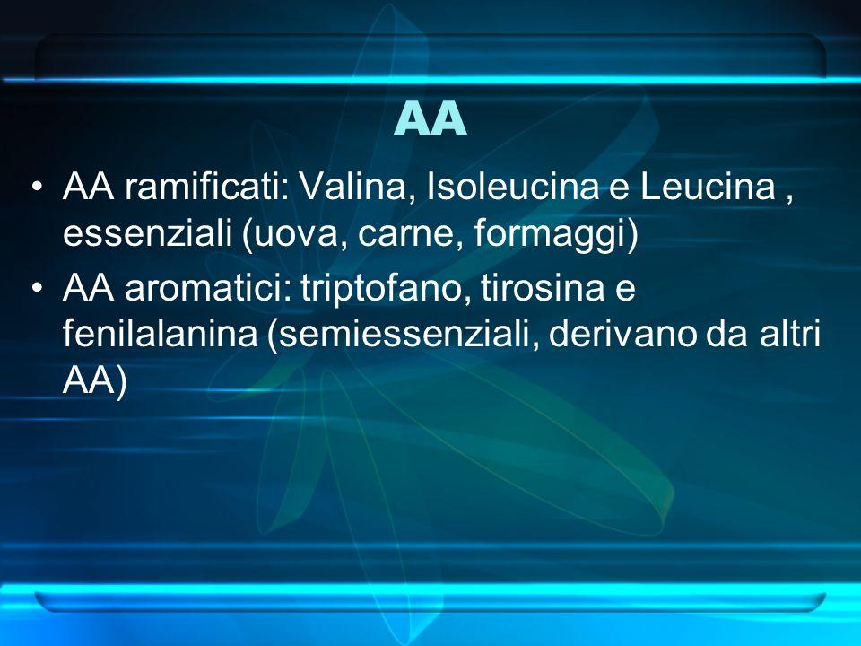 AA AA ramificati: Valina, Isoleucina e Leucina , essenziali (uova, carne, formaggi)