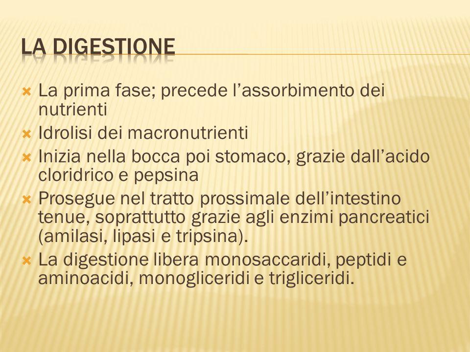 La Digestione La prima fase; precede l'assorbimento dei nutrienti
