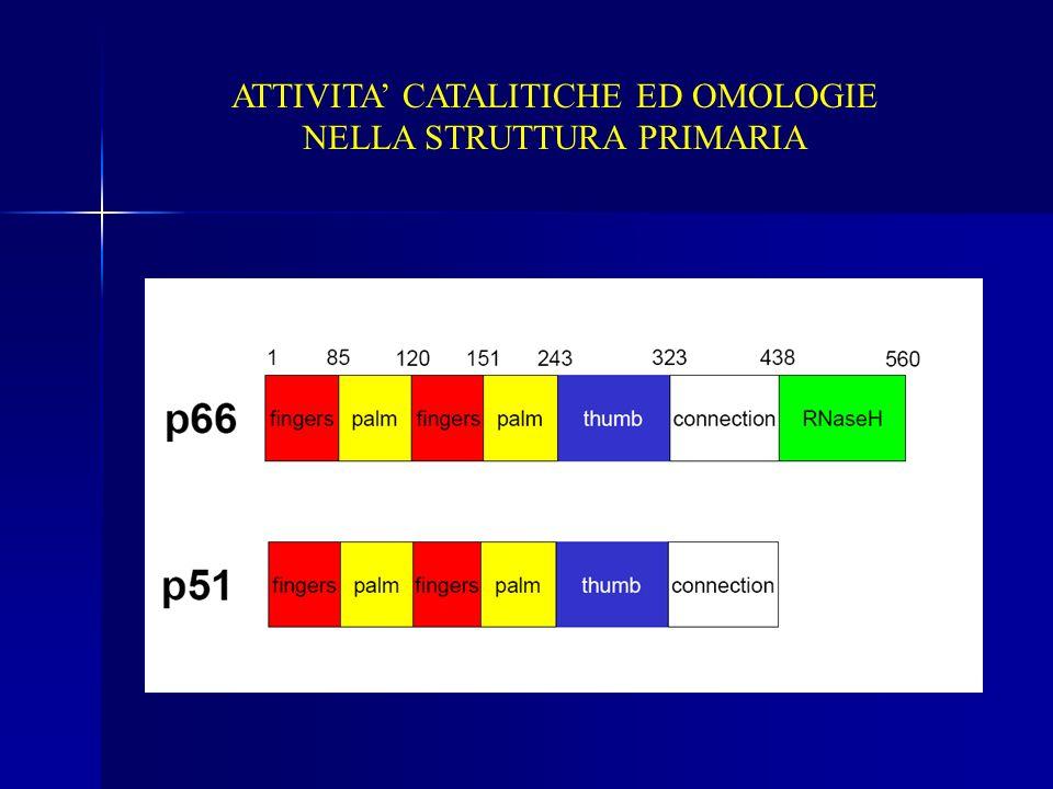ATTIVITA' CATALITICHE ED OMOLOGIE NELLA STRUTTURA PRIMARIA