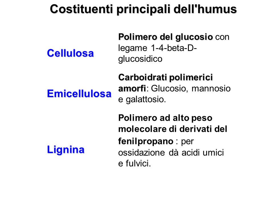 Costituenti principali dell humus