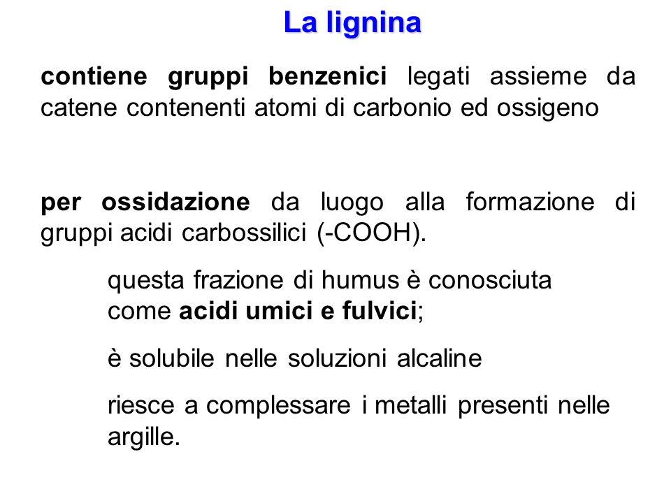 La lignina contiene gruppi benzenici legati assieme da catene contenenti atomi di carbonio ed ossigeno.