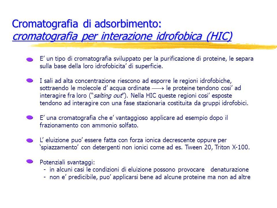 Cromatografia di adsorbimento: cromatografia per interazione idrofobica (HIC)