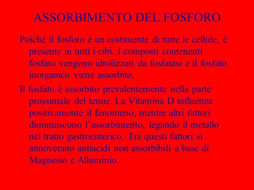 ASSORBIMENTO DEL FOSFORO