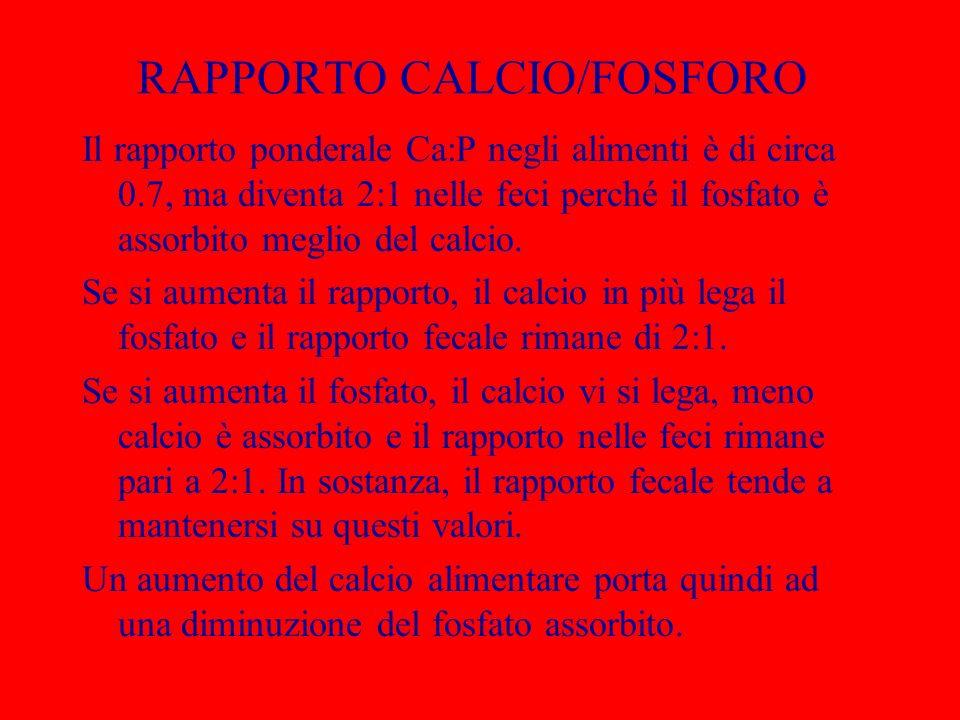 RAPPORTO CALCIO/FOSFORO
