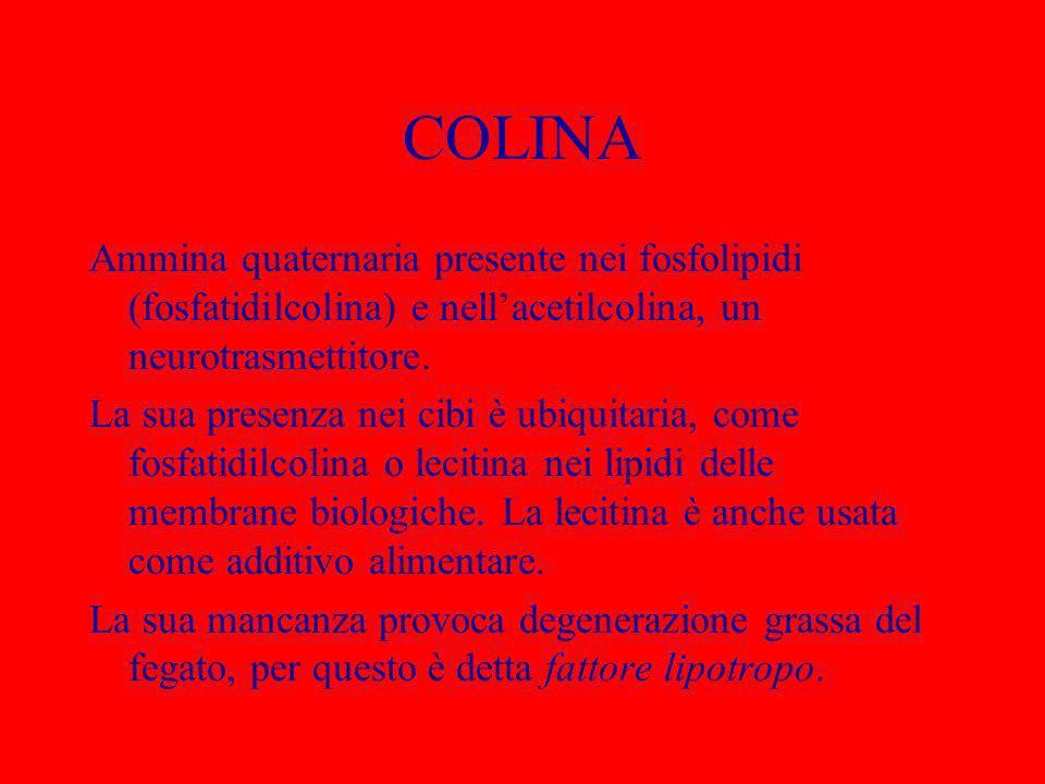 COLINA Ammina quaternaria presente nei fosfolipidi (fosfatidilcolina) e nell'acetilcolina, un neurotrasmettitore.