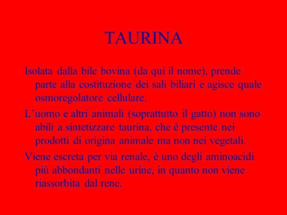 TAURINA Isolata dalla bile bovina (da qui il nome), prende parte alla costituzione dei sali biliari e agisce quale osmoregolatore cellulare.