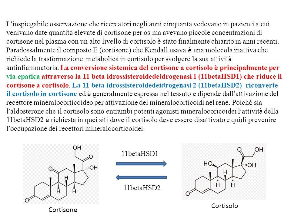 L'inspiegabile osservazione che ricercatori negli anni cinquanta vedevano in pazienti a cui venivano date quantità elevate di cortisone per os ma avevano piccole concentrazioni di cortisone nel plasma con un alto livello di cortisolo è stato finalmente chiarito in anni recenti. Paradossalmente il composto E (cortisone) che Kendall usava è una molecola inattiva che richiede la trasformazione metabolica in cortisolo per svolgere la sua attività antinfiammatoria. La conversione sistemica del cortisone a cortisolo è principalmente per via epatica attraverso la 11 beta idrossisteroidedeidrogenasi 1 (11betaHSD1) che riduce il cortisone a cortisolo. La 11 beta idrossisteroidedeidrogenasi 2 (11betaHSD2) riconverte il cortisolo in cortisone ed è generalmente espressa nel tessuto e dipende dall'attivazione del recettore mineralocorticoideo per attivazione dei mineralocorticoidi nel rene. Poichè sia l'aldosterone che il cortisolo sono entrambi potenti agonisti mineralocoricoidei l'attività della 11betaHSD2 è richiesta in quei siti dove il cortisolo deve essere disattivato e quidi prevenire l'occupazione dei recettori mineralocorticoidei.